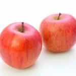 犬はりんごを食べられる!与え方と7つの注意点【獣医師監修】