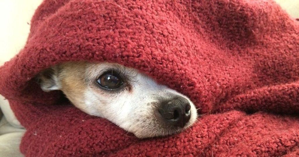 犬が寒がりな時のケア