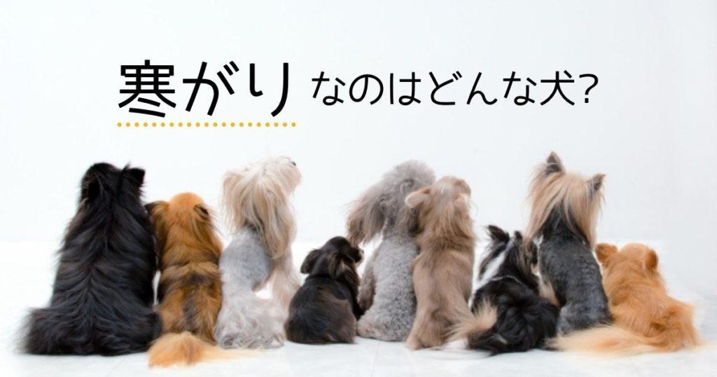寒がりな犬種