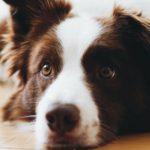 犬の生理中、散歩はどうする?【獣医師監修】