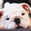 犬の食糞。よくある6つの理由と対策【獣医師監修】