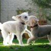 犬の多頭飼いの前に…考えておくべき7つのこと【獣医師監修】