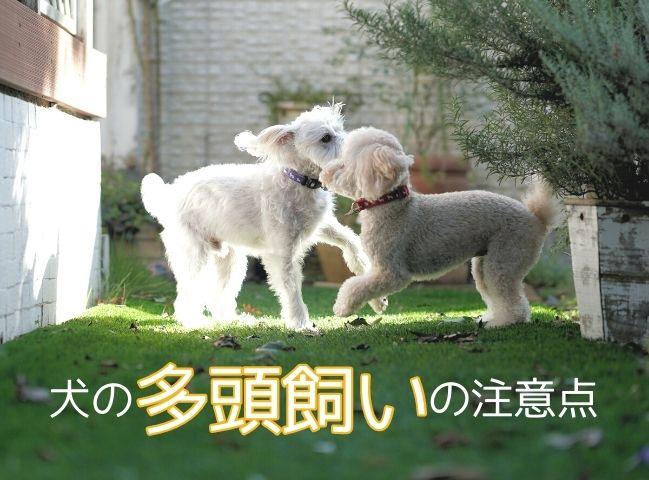 多頭飼いで楽しく暮らす犬