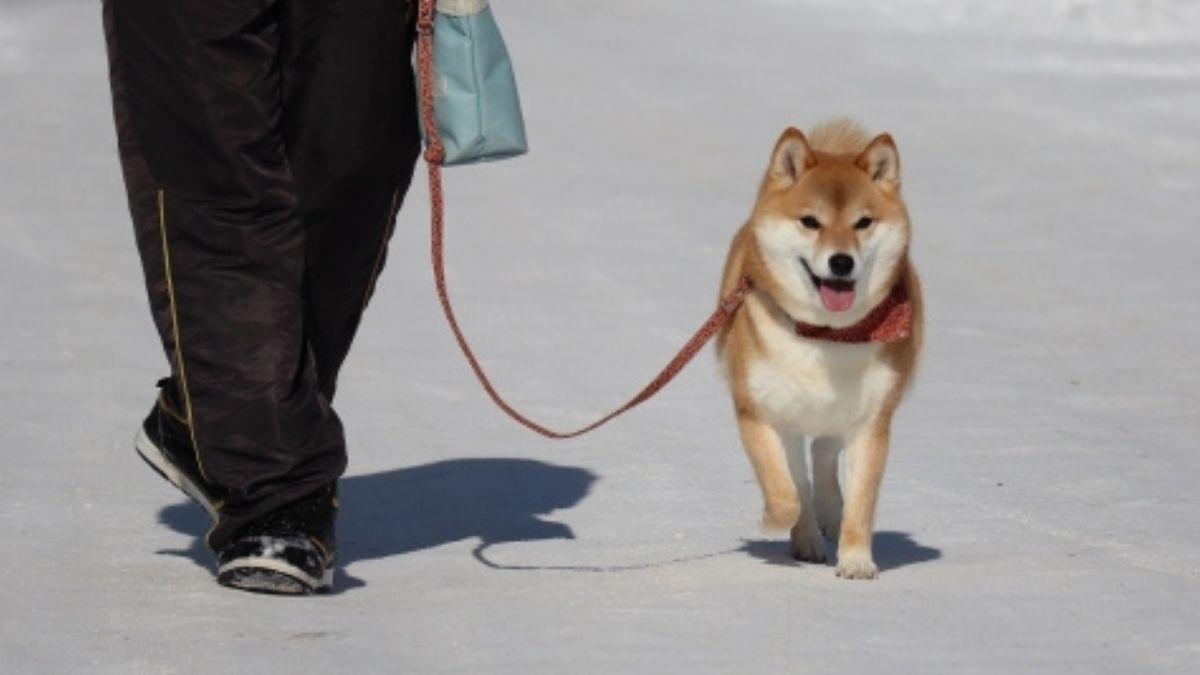 冬も散歩を楽しむ犬