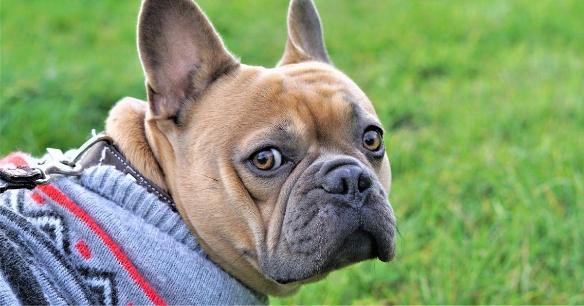 体温調節に注意が必要な服を着ている犬