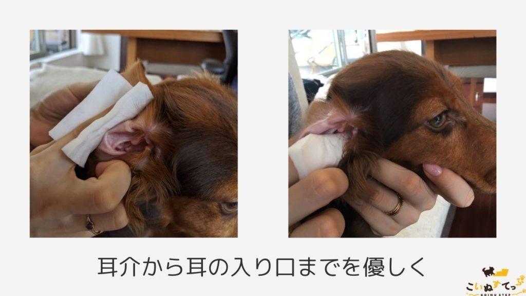 綿棒なしで耳掃除をしている犬