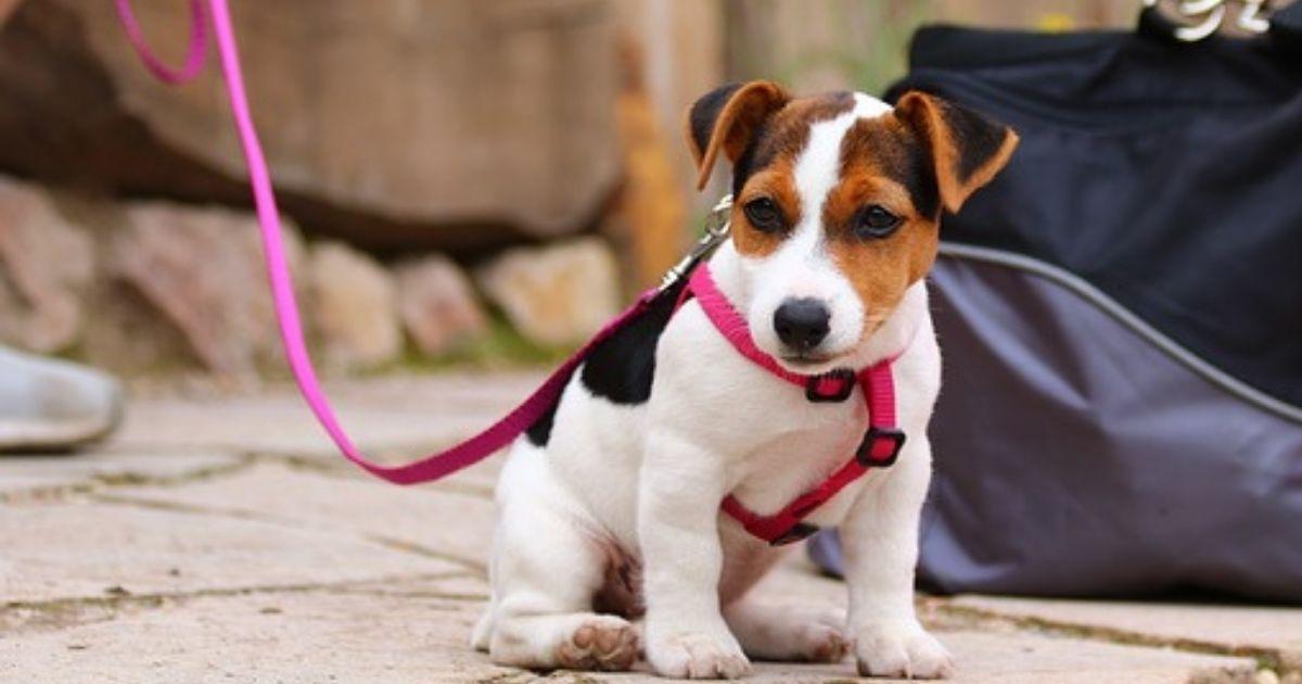 適切なリードを選んで持ち物に入れている犬