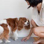 犬に「おいで」を教える方法【獣医師監修】