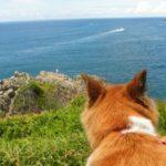 犬との旅行に必須の持ち物リスト【獣医師監修】