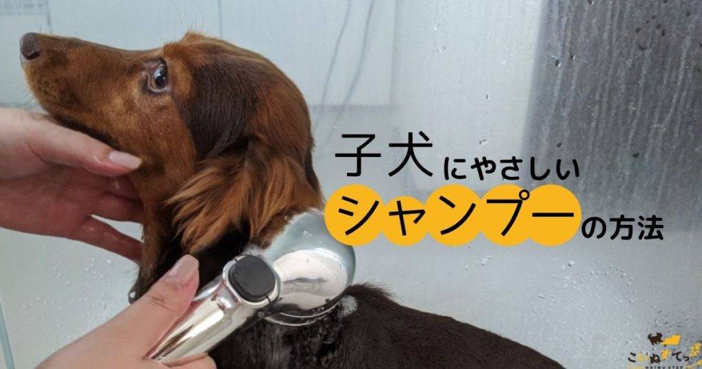 子犬のシャンプーのやり方
