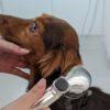 子犬のシャンプーのやり方。詳細解説【獣医師監修】
