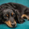 犬のストレスサインとはどんなもの?【獣医師監修】