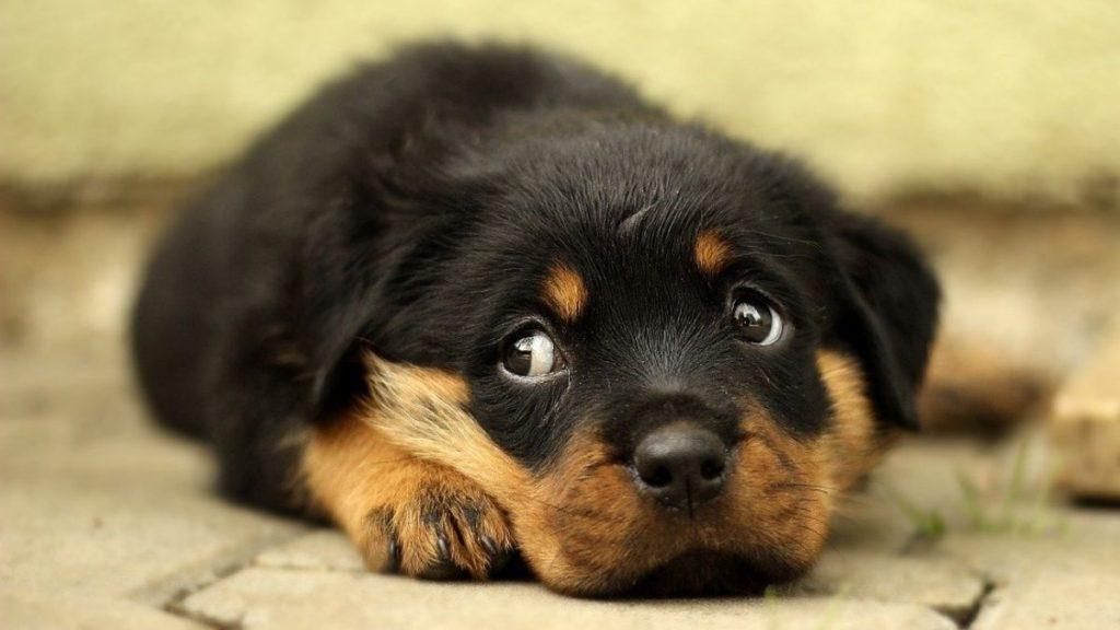 ストレスサインを見せてはいない犬