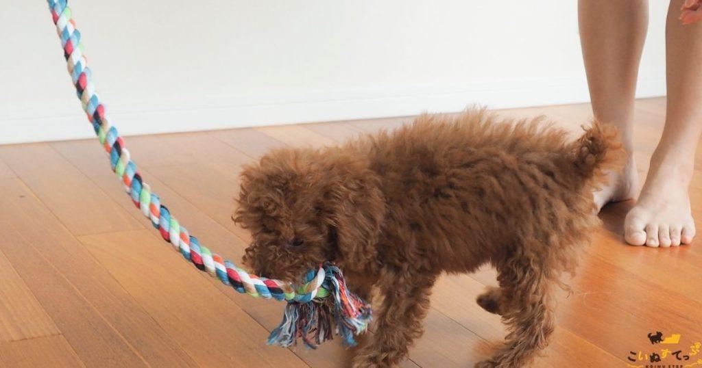 イタズラしないよう本能を刺激する遊び方をする子犬