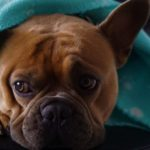 犬との冬の過ごし方のポイント7選【獣医師監修】