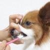 犬の歯磨き。苦手を克服する4つのコツ【獣医師監修】