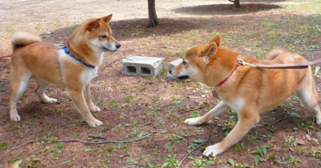 散歩中に他の犬に吠えた犬