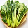 犬への小松菜の与え方と3つの注意点【獣医師監修】