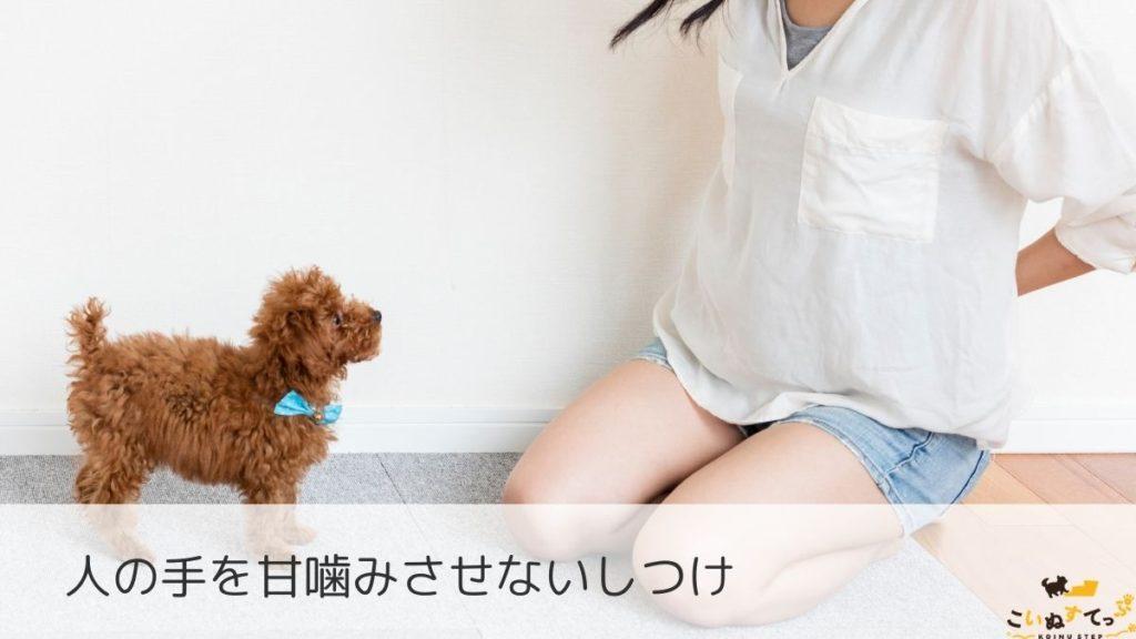 甘噛みのしつけをする時期の子犬