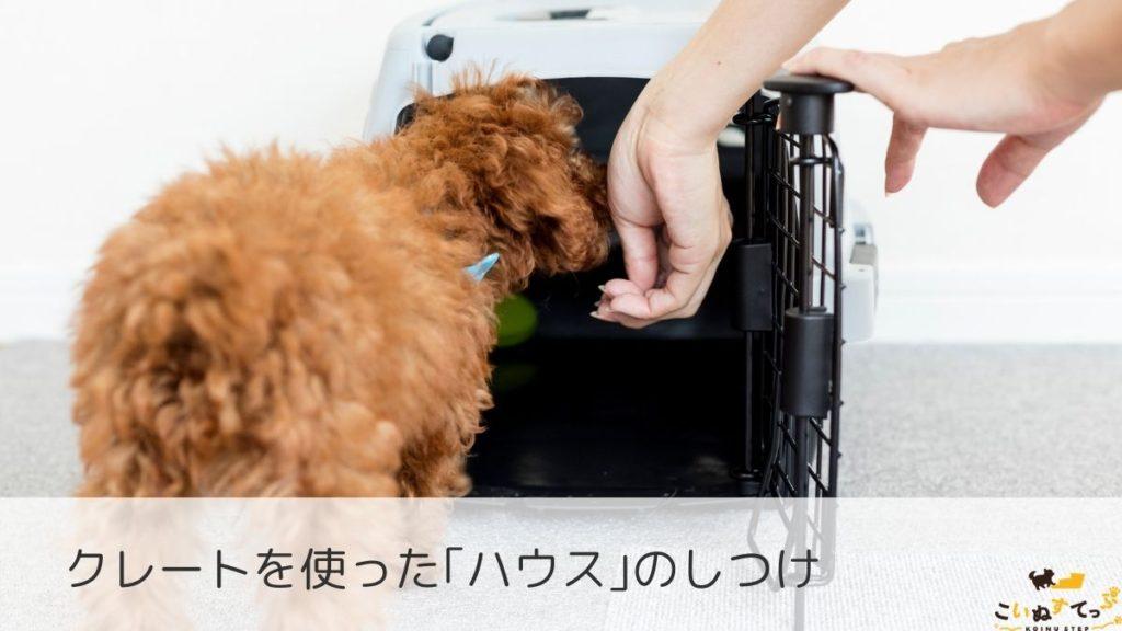 クレートトレーニングをする子犬