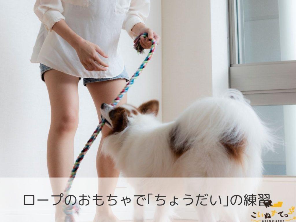 ちょうだいのしつけをする犬