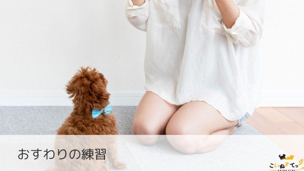 おすわりの練習をする時期の子犬