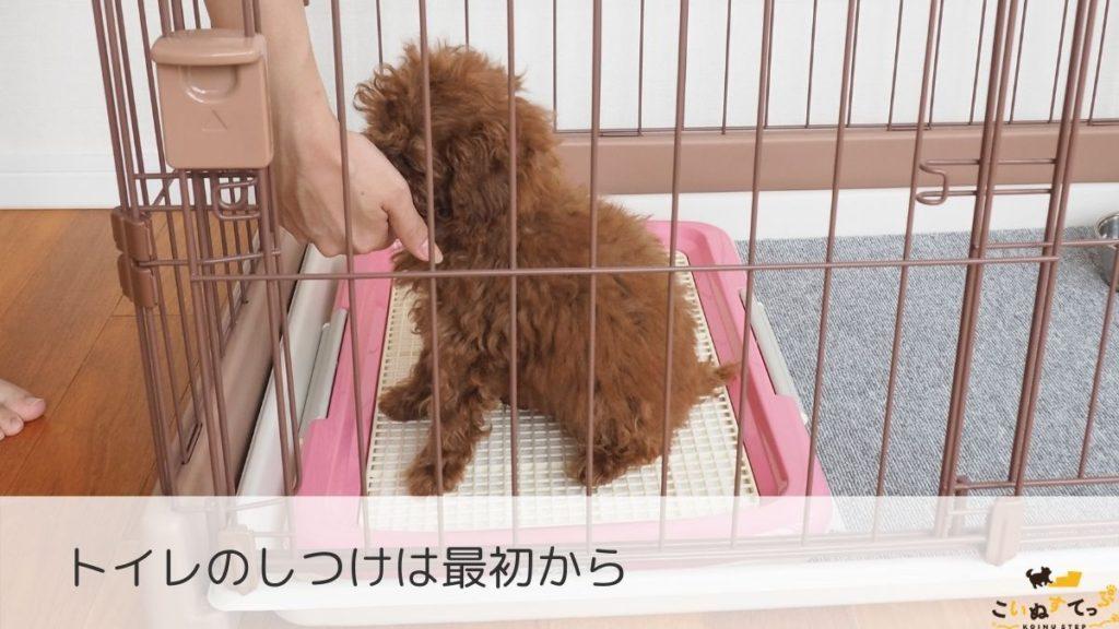 トイレのしつけをはじめる時期の子犬