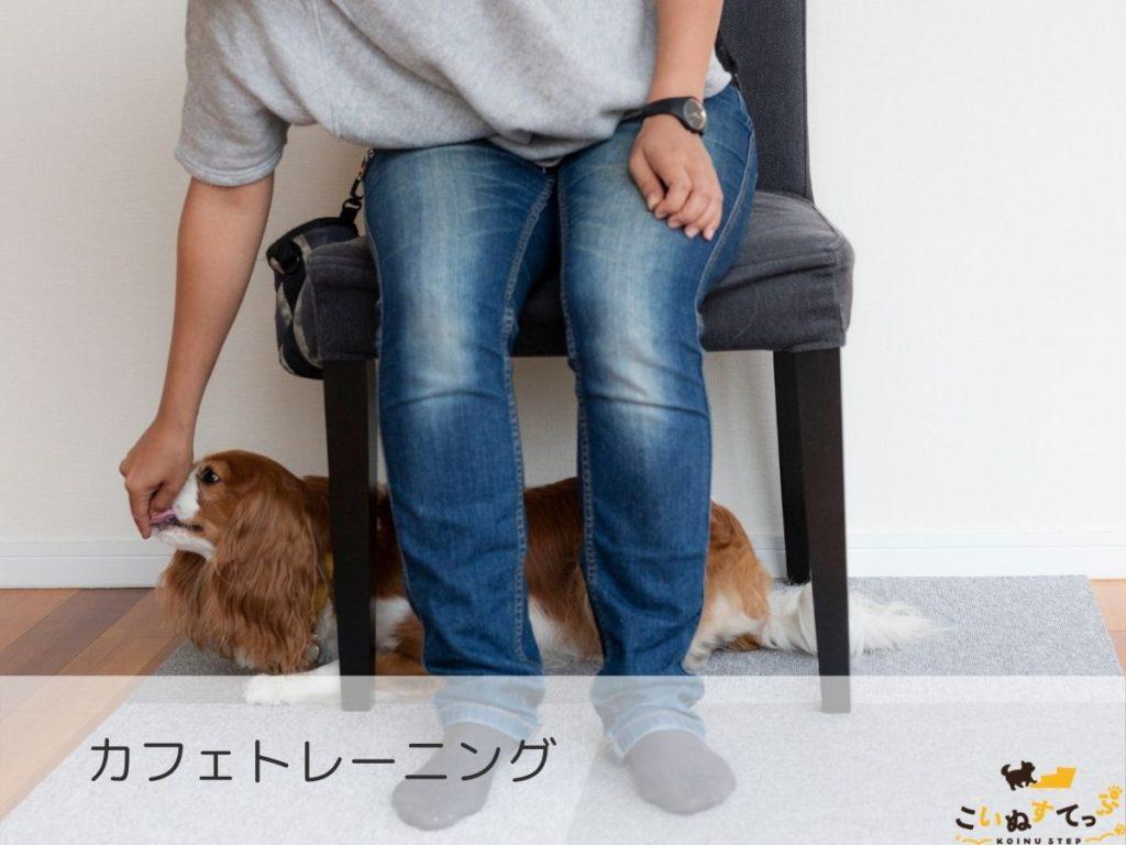 カフェトレーニングのしつけをする犬