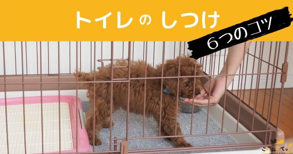 トイレのしつけをしている犬