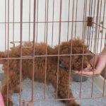 犬のトイレのしつけの基本。早く成功するためのコツ6つ【獣医師監修】