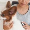 ブラッシングが嫌いな犬のための練習方法【獣医師監修】