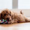 犬を飼う準備。最初から用意するべきグッズ7選【獣医師監修】