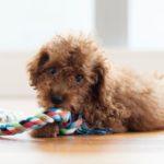 犬のしつけ方。知っておくべき4つの基本【獣医師監修】