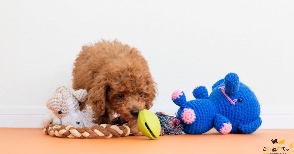 甘噛みがの治らないので噛んでいいおもちゃをたくさんもらった子犬