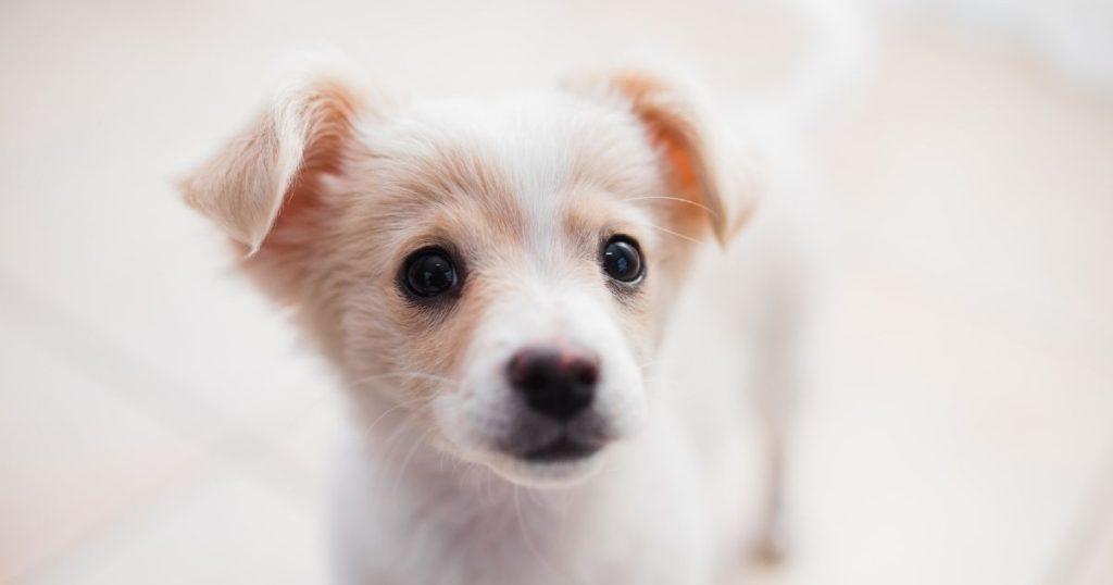 名前を考えてもらった子犬