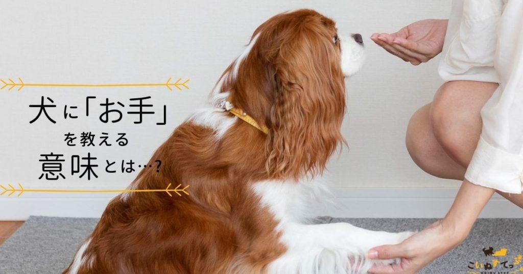 意味のあるお手をする犬