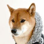 愛犬にしてあげたい寒さ対策【獣医師監修】