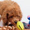 子犬のしつけのスタート時期。月齢ごとの目安を解説【獣医師監修】