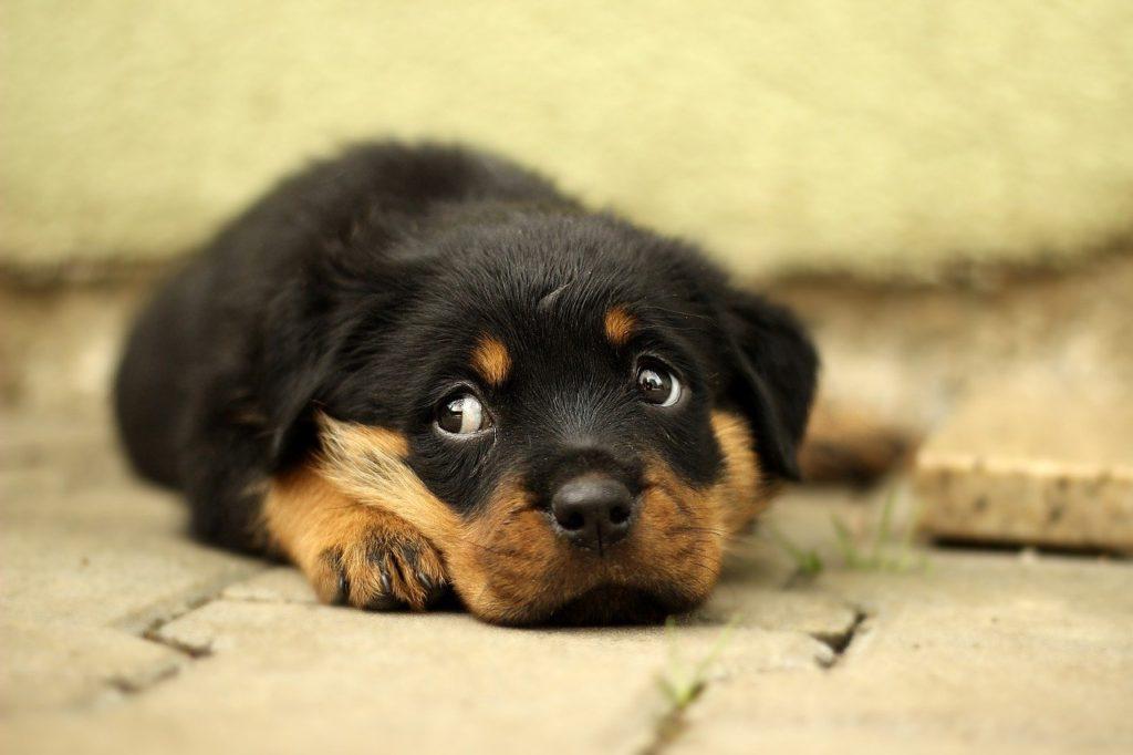 粗相を叱られて、排泄自体を叱られたと思った犬