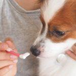 犬の歯磨きのベストな頻度とその理由【獣医師監修】