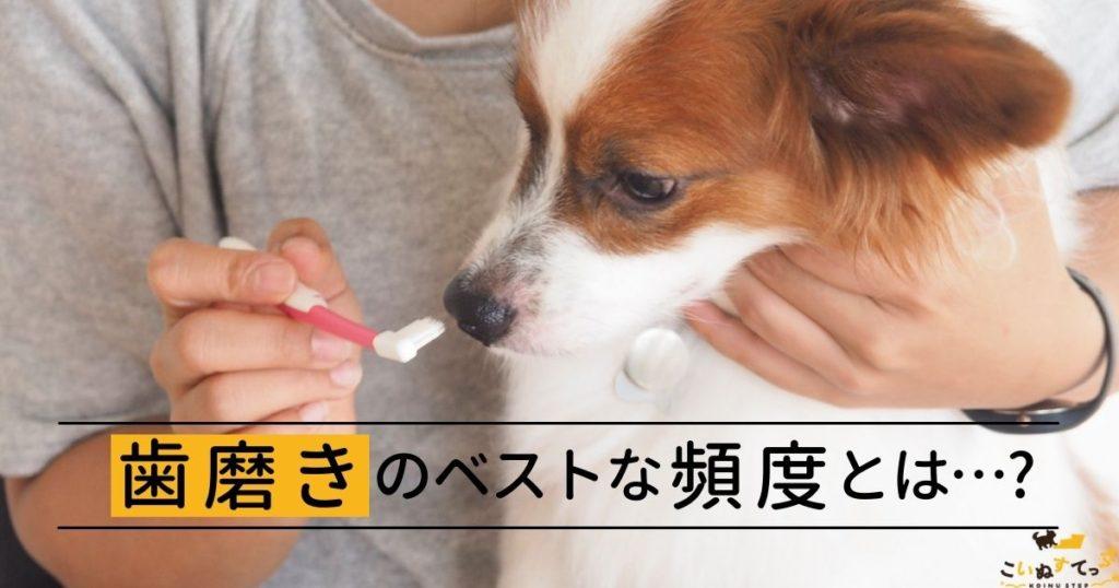 毎日の頻度で歯磨きをする犬