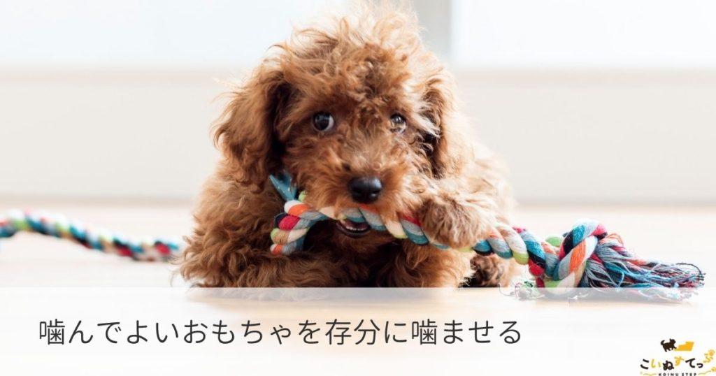 じゃれ噛み対策としておもちゃをかじる子犬