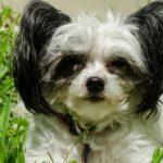 マダニが犬に寄生して起こる深刻な病気とは…【獣医師監修】