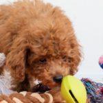 犬の留守番のストレス解消の方法5選【獣医師監修】