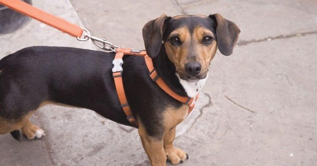 清潔な状態で、マナーを守って入館する犬