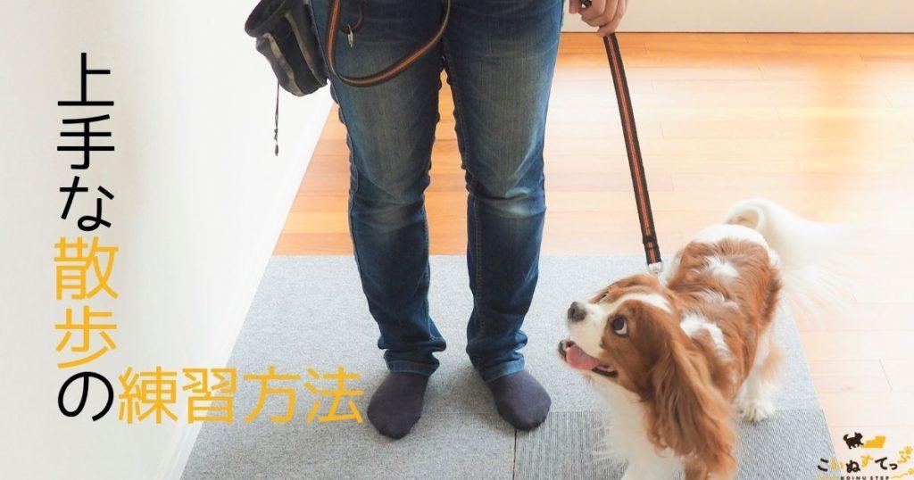 うまく散歩の練習をする子犬