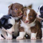 子犬の社会化とは…?知っておくべき5つのこと【獣医師監修】