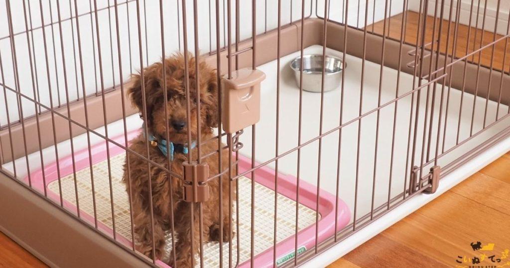 トイレのしつけをしている2ヵ月の子犬