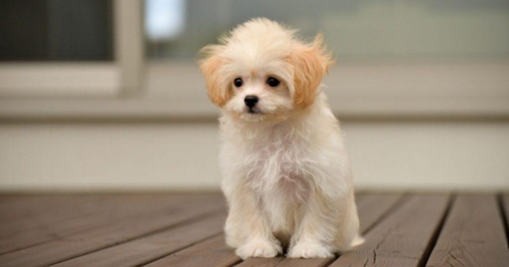 フィラリア予防が必要な室内犬