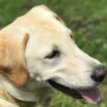 犬のフィラリア予防の方法と必ず守るべきポイント 【獣医師監修】